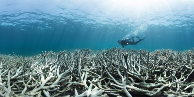 Surveying coral bleaching in 2016 / Photo XL Catlin Seaview Survey